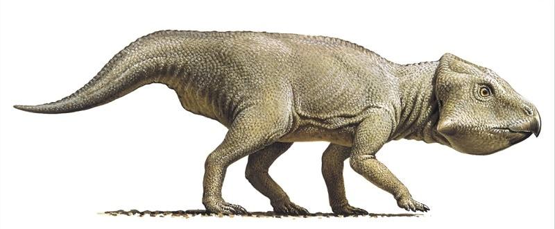 dinosaurio leptoceratops