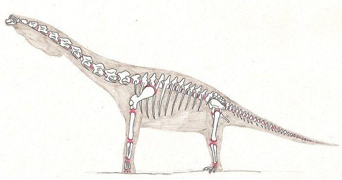Descripción del Giraffatitan