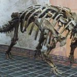 fósiles encontrados y exhibidos del ankylosaurus