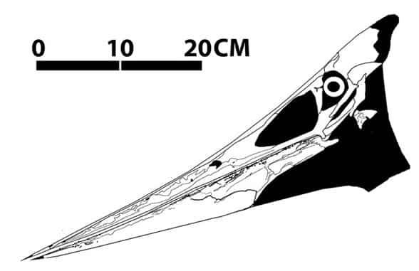 craneo-pteranodon