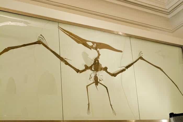 Reconstrucción de un Pteranodon