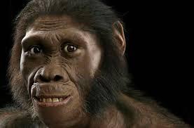 cara austrolopithecus sediba