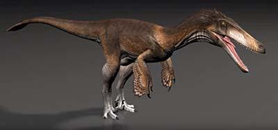 Austroraptor – dinosaurio carnívoro