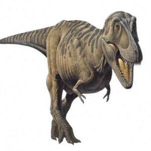 Tarbosaurus – dinosaurio carnívoro