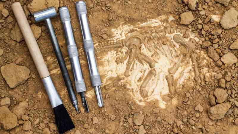 aprende paleontologia