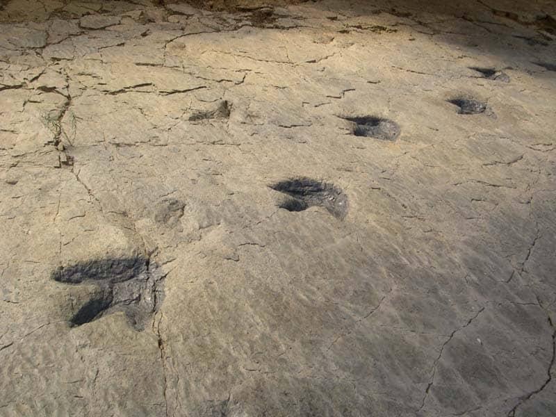 marcas de huellas de dinosaurios encontradas