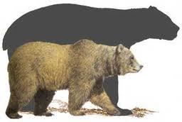 el oso prehistórico