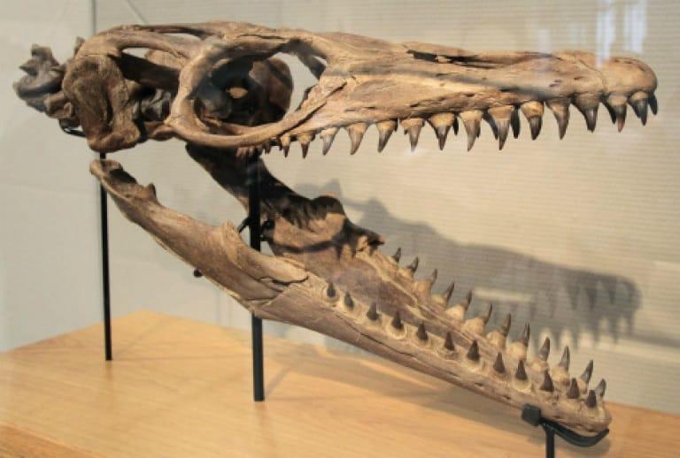 dientes de dinosaurios