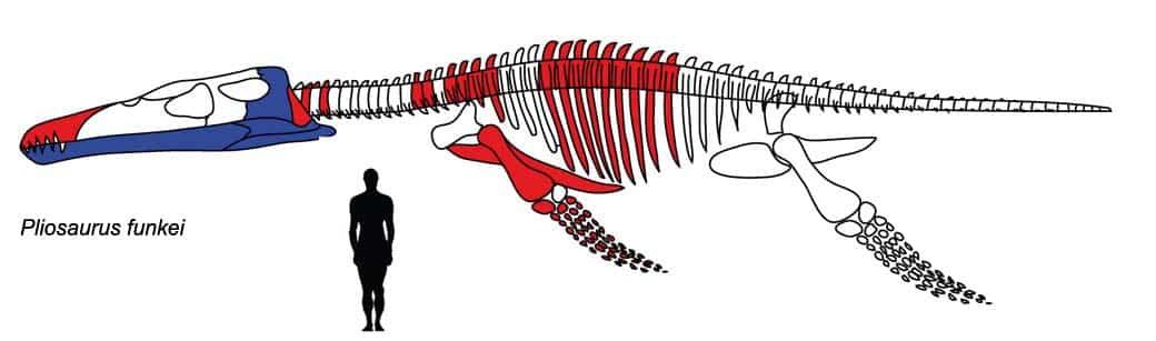 PredatorX-Pliosaurus_funkei