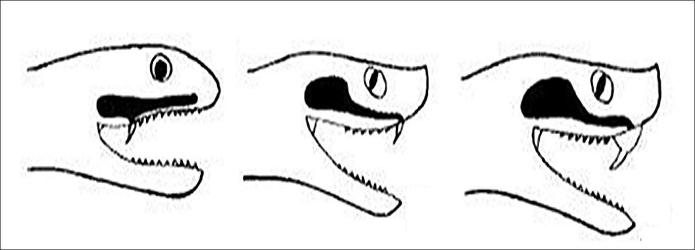 denticion02