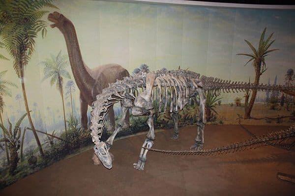 Camarasaurios y sus vértebras huecas