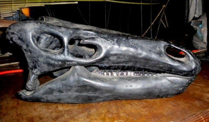 craneo-camptosaurus