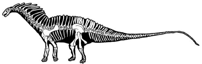 caracteristicas-amargasaurus