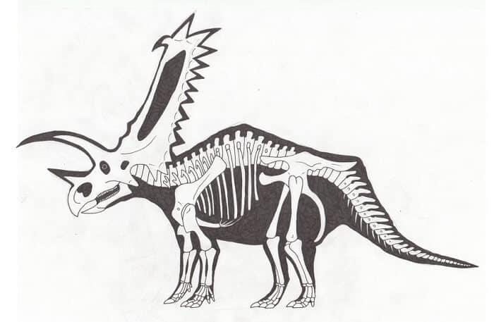 Descripción del Pentaceratops