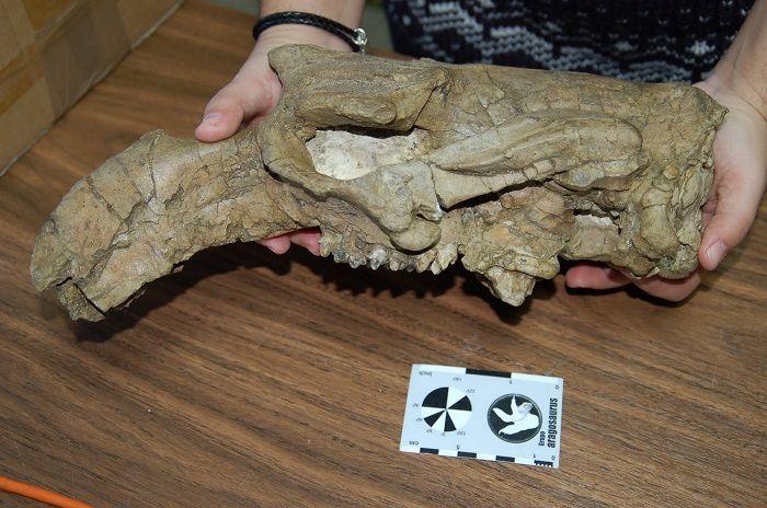 Descubrimiento de fósiles de Aragosaurus