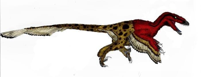 Dibujo de un Utahraptor
