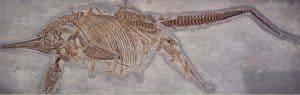 ichthyosaurus pariendo