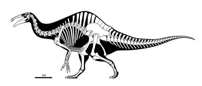 Descripción del Deinocheirus