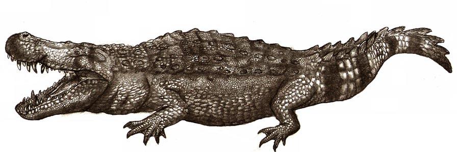 Purussaurus brasiliensis el mortifero cocodrilo gigante