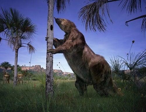 El Megatherium: el oso prehistórico de 6 metros de altura