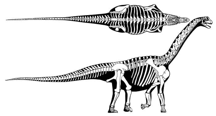Características del Camarasaurus