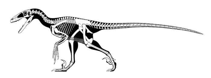 Descripción del Deinonychus