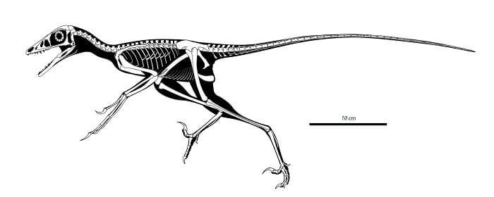 descripcion-microraptor