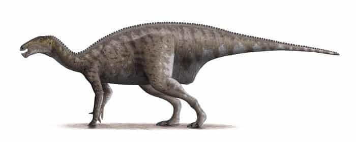 Información sobre el Iguanodon