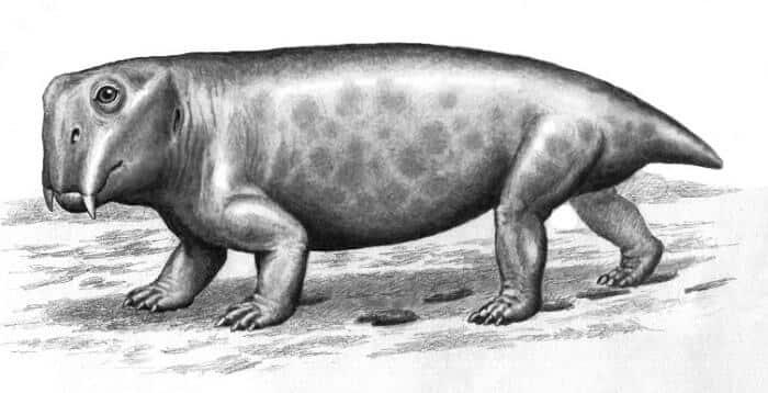 Información básica sobre Lystrosaurus