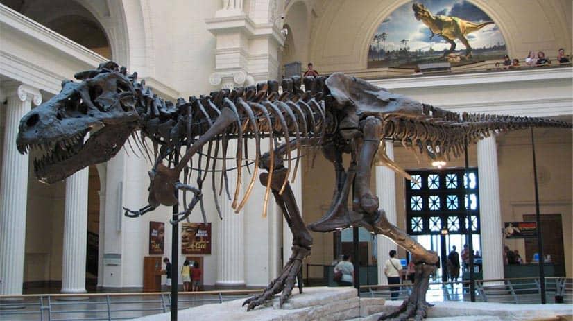 museo-de-dinosaurios
