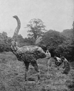 moa un ave enorme!!