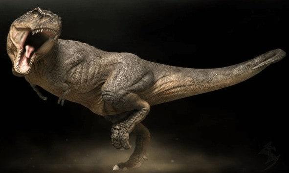 cuantos años vivia un rex