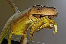 Herrerasaurus_comiendo