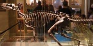 herrerasaurus -esqueleto
