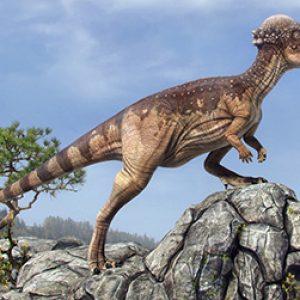 Pachycephalosaurus – dinosaurio omnivoro