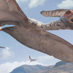 Pteranodon – dinosaurios voladores