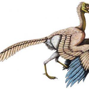 archaeopteryx – dinosaurio carnivoro