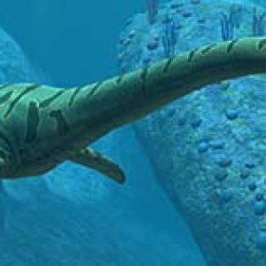 elasmosaurus – dinosaurio marino