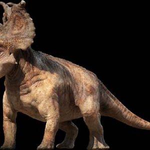 pachyrhinosaurus – dinosaurio herbivoro