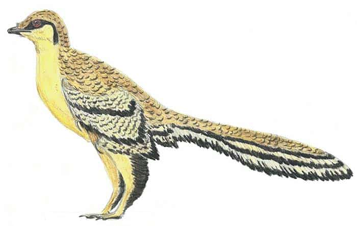 Aurornis - ave prehistorica