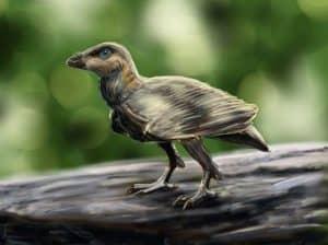 Bohaiornis - ave prehistorico