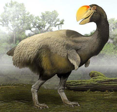 Bullockornis - ave prehistorica