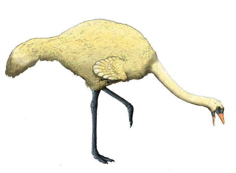 Gargantuavis - ave prehistorica