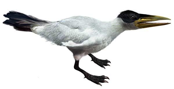 Ichthyornis - ave preshistorica