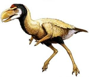 Titanis - ave prehistorica