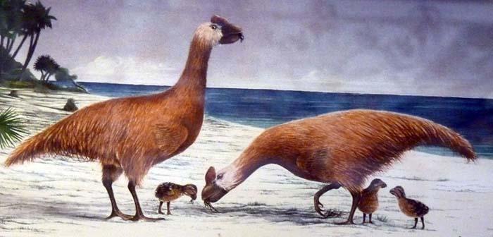 listado de aves preshitoricas