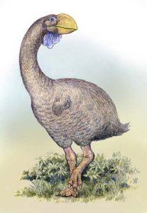 dromornis - ave prehistorica